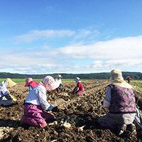 2015年収穫風景4