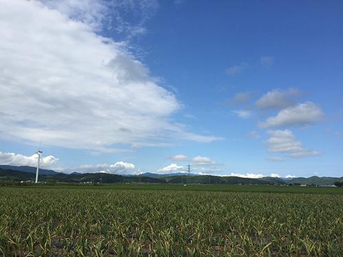 品川甚作農園|風景
