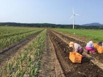 2017年収穫